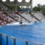 Sea World Orlando - Shamu - 024