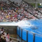 Sea World Orlando - Shamu - 027